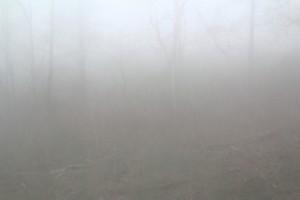 Stille - Wald #1, 2014
